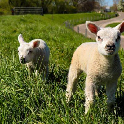 Top 5 things farm attractions do for lambs farm events
