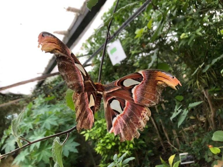 Studley Grange Butterfly World 768x576