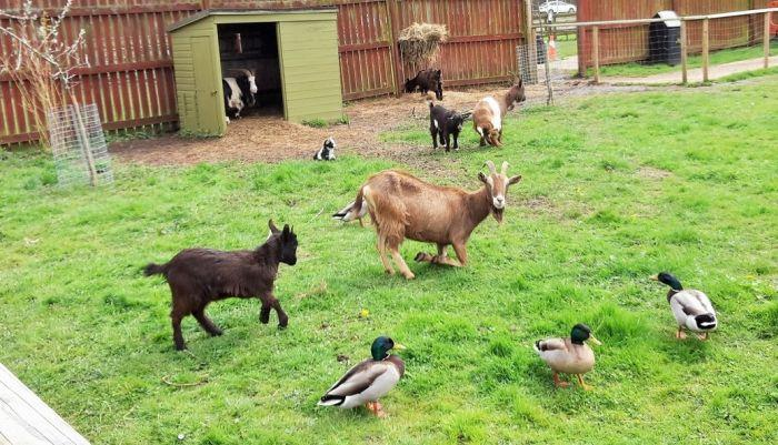 Whisby Animal Park and Playbarn