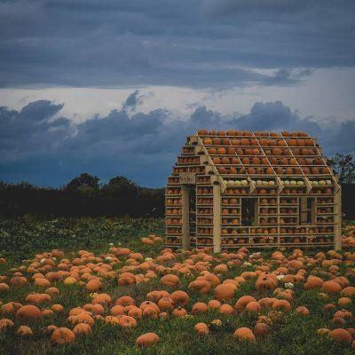 Top Pumpkin Patches at Children's Farms in Yorkshire