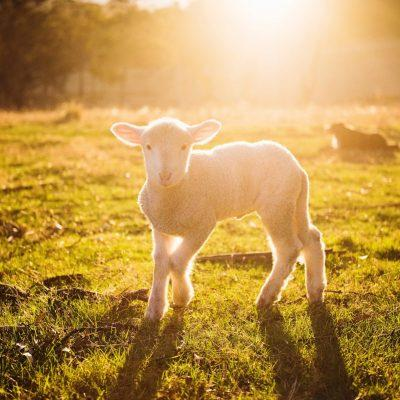 Springtime at a Children's Farm in and around Buckinghamshire