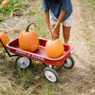 Free Pumpkin with Children's Farm entry across the UK